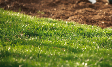 feb-2019-clp-lawn-garden-grass-care-900x600