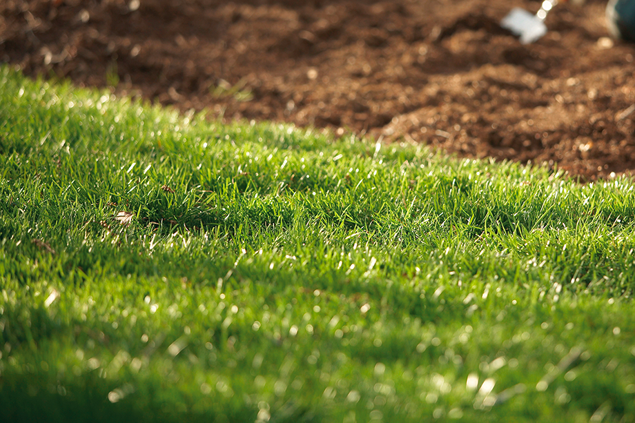 feb-2019-clp-lawn-garden-grass-care-900x600